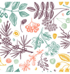 hand drawn berries backdrop in engraved style vector image