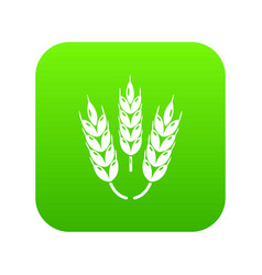 Juicy wheat icon green vector