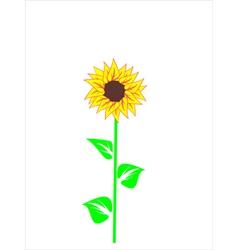 beautiful sunflower vector image