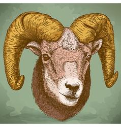 engraving ram head retro vector image vector image