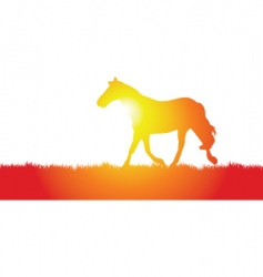 horse meadow vector image