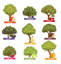 orchard trees and bushes with ripe fruits with vector image