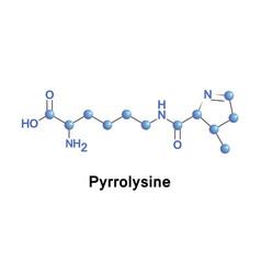 Pyrrolysine alpha-amino acid vector