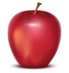 Red whole ripe apple on white background vector