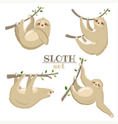 set sloths hanging on sprigs with leaves vector image