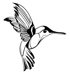 hand drawn tattoo sketch colibri drawing vector image
