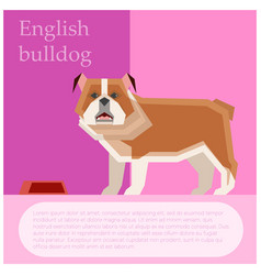 english buldog postcard vector image