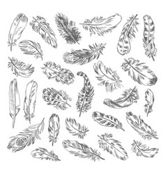 freehand drawing quill vector image