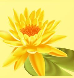 lotus flower floral background vector image