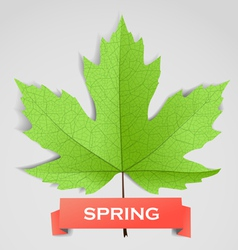 Maple leave with spring banner vector image vector image