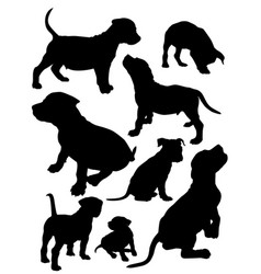 Puppies pit bull vector