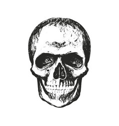 skull with texture vector image