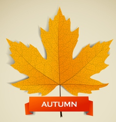 Maple leave with autumn banner vector image vector image