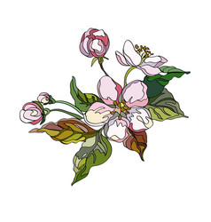 apple flowers vector image