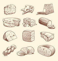 Hand drawn cheese various types cheeses tasty vector