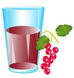 Juice from berry wood sorrel vector image