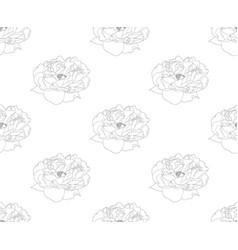 peony on white background vector image