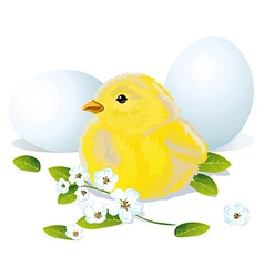 easter chicken and eggs vector image