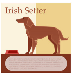 irish setter colourful postcard vector image