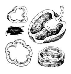 Pepper hand drawn set vegetable engraved vector