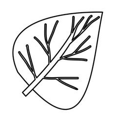 Sketch contour of closeup wide leaf plant vector