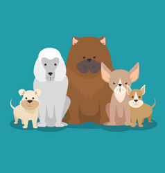 cute puppy dog vector image