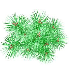 Fir tree branch vector