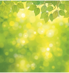 spring leaves background vector image