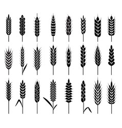 wheat ears icons organic agriculture cereals vector image