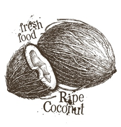 coconut logo design template fresh food or vector image vector image