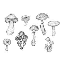 Collection of black and white hand drawn mushrooms vector image