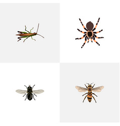 Realistic tarantula wasp locust and other vector