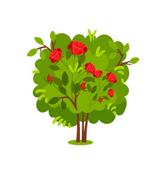 Green bush with bright red roses shrub with vector