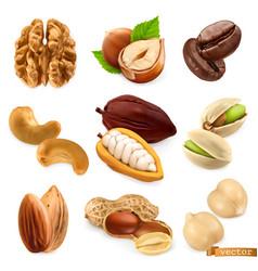 Nuts and beans walnut hazelnut coffee cashew vector