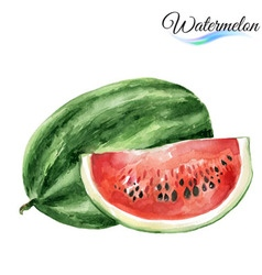 Watercolor watermelon vector image