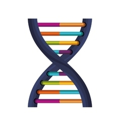 deoxyribonucleic acid with bases in color vector image