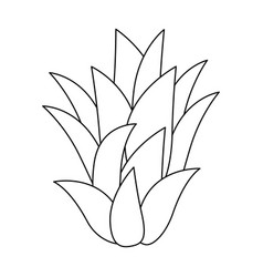 Sweet and delicious pineapple leaves vector
