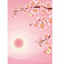 Sakura cherry blossom vector image vector image