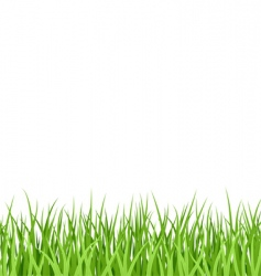 grass pattern vector image vector image