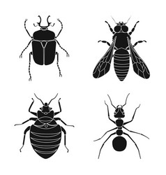 isolated object of insect and fly icon set of vector image