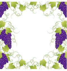 Purple grape frame vine on white background vector