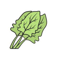 Spinach color icon vector