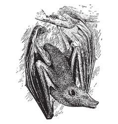 Flying fox bat vintage vector