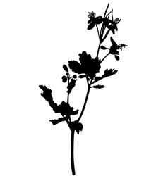 Grass celandine vector