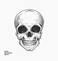 human scull hand drawn skeleton engraved style vector image