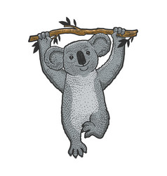 koala bear on tree sketch engraving vector image