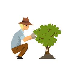Male farmer picking berries from bush gardener at vector