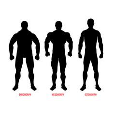 Men body types diagram with three somatotypes vector