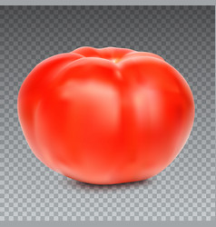 Red whole tomato isolated on a transparent vector