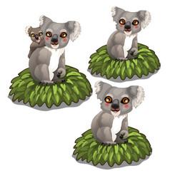 koala bears family sits on leaves animals vector image